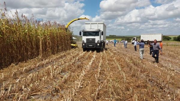 AGRICULTURA Governo de Alagoas inicia safra de grãos 2018 nesta sexta-feira, em Anadia