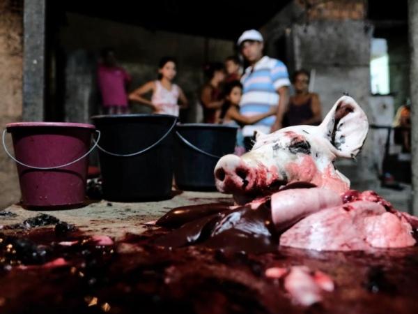 FPI interdita matadouro clandestino em Santana do Ipanema