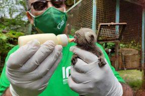 ima-promove-campanha-de-arrecadacao-para-filhotes-recebidos-pelo-cetas
