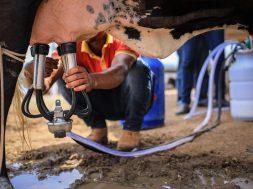 alagoas-tera-o-melhor-preco-pago-ao-produtor-de-leite-no-pais