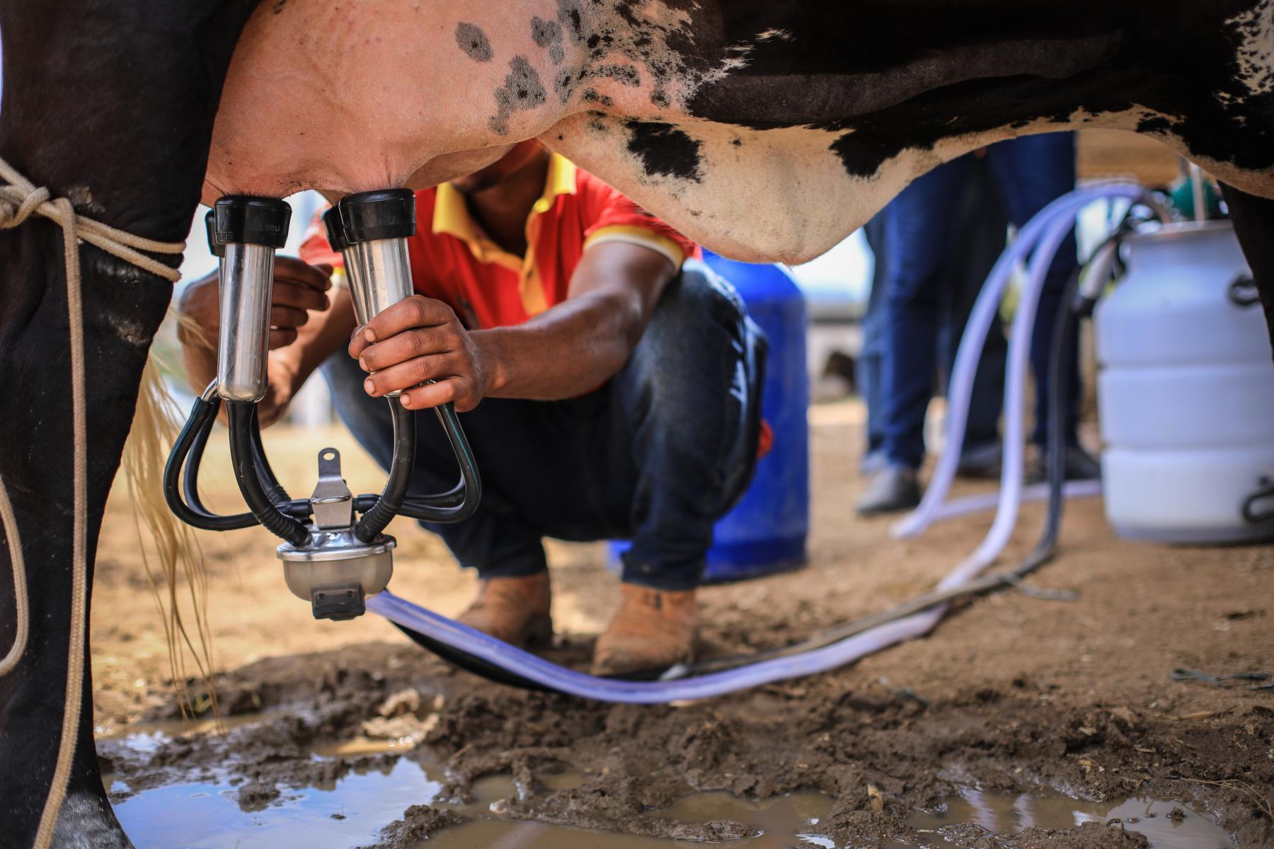 Alagoas terá o melhor preço pago ao produtor de leite no país